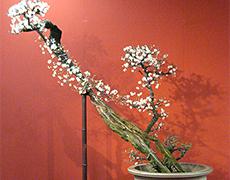 写真:千代の苔